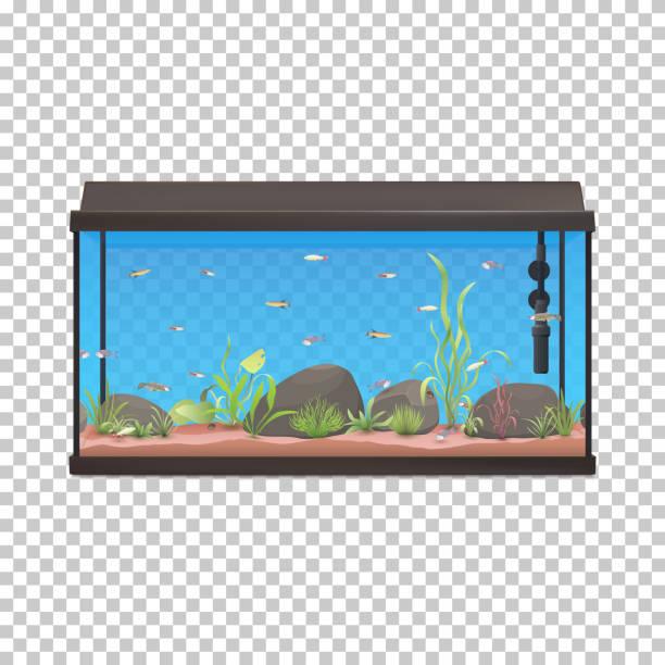 fischbehälter. abbildung aquarium mit fischen steinen und pflanzen. - schwimmpflanzen stock-grafiken, -clipart, -cartoons und -symbole