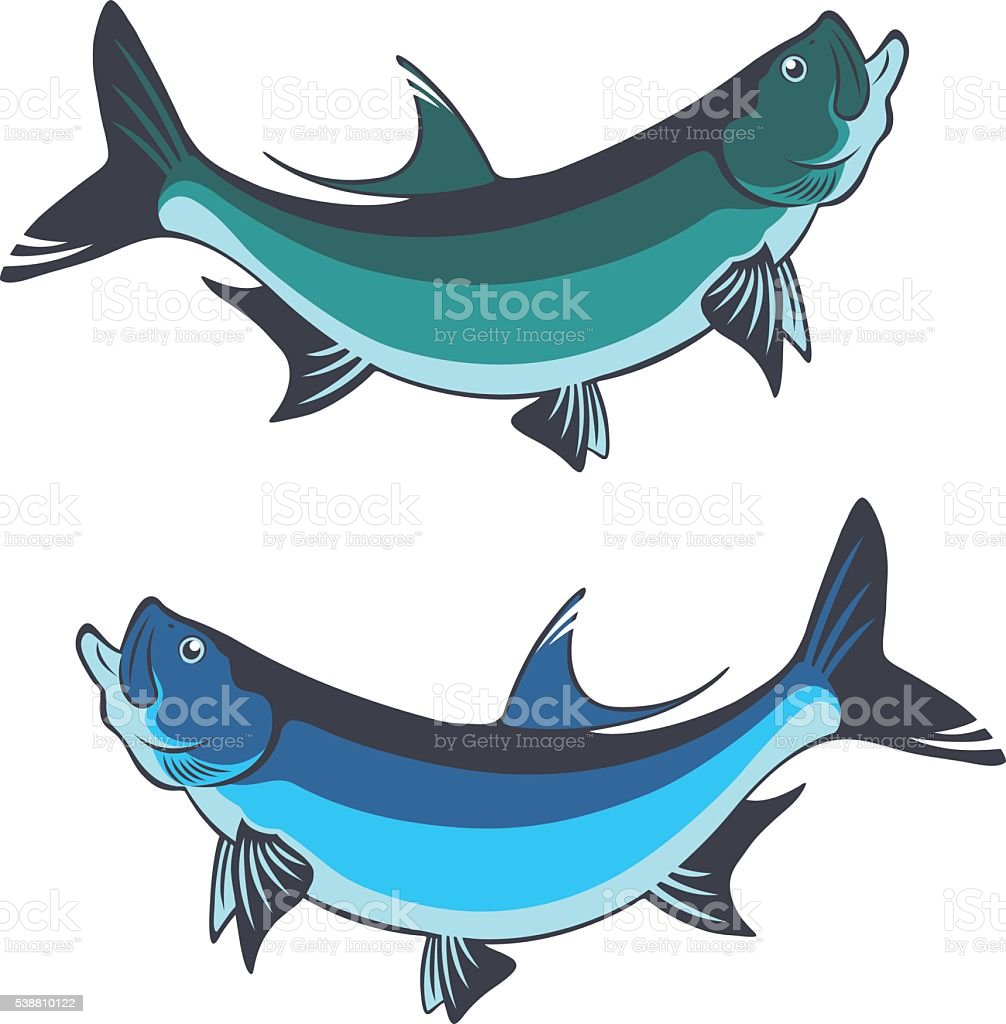 fish tarpon vector art illustration