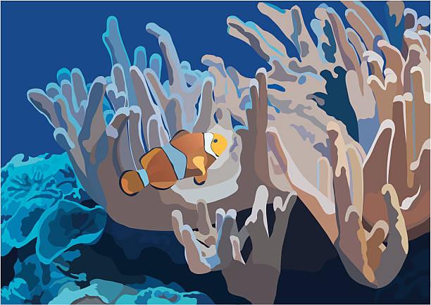 fish clownfish swimming around coral reef animal captivity building stock illustrations