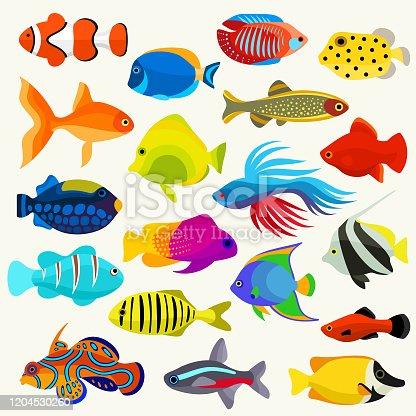 Decorative fish species vector set