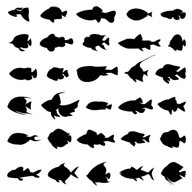 Fish vector silhouettes black on white – Vektorgrafik