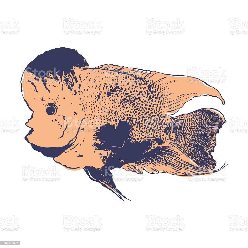 fish wood block print flowerhorn fish japanese style vector stock rh istockphoto com Flowerhorn Fish Care Arowana Fish