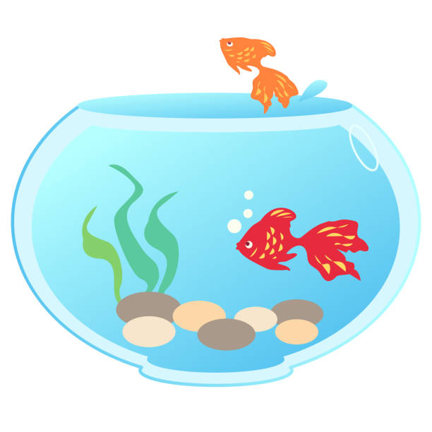 A fishbowl with two goldfish vector art illustration