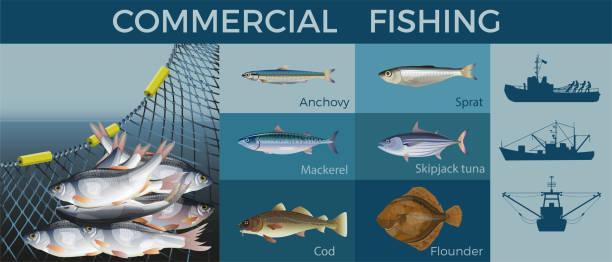 ilustrações de stock, clip art, desenhos animados e ícones de fishery industry set, vector illustration - aquacultura
