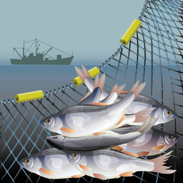 Fishery poster vector Industrial fishery poster with fish in nets and fishing vessel. Vector illustration seine river stock illustrations