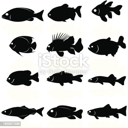 12 different fish silhouetes (from left to right): blue stripe snapper, black pacu, pajama cardinalfish, french angelfish, lionfish, archerfish, bluegill, carp, walleye, pollack, african cichlid, brook trout.