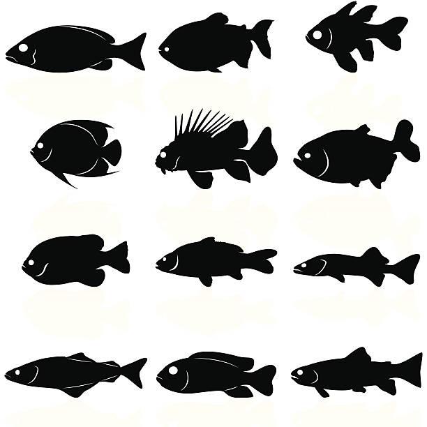 illustrazioni stock, clip art, cartoni animati e icone di tendenza di silhouette di pesci - pesci
