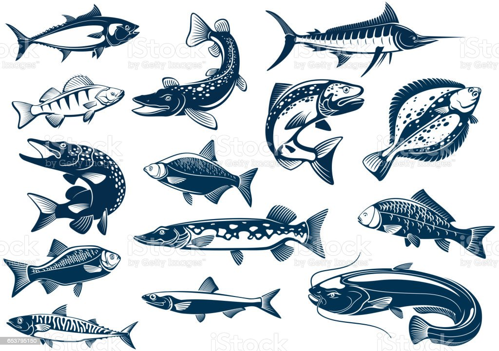Fishes species vector isolated icons vector art illustration