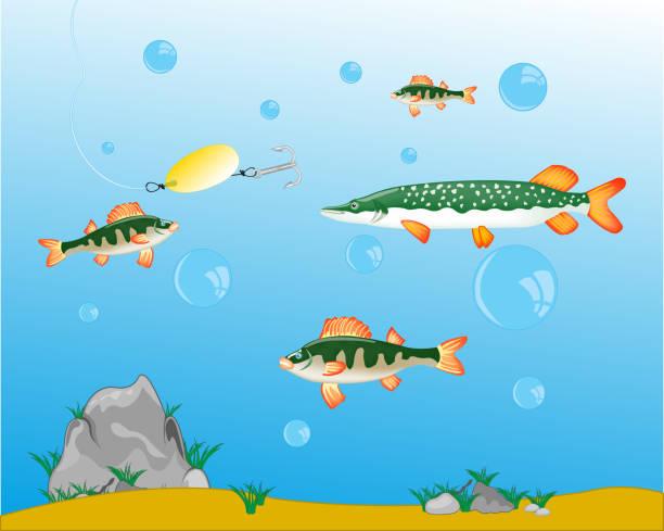angeln auf hecht und barsch - seehecht stock-grafiken, -clipart, -cartoons und -symbole