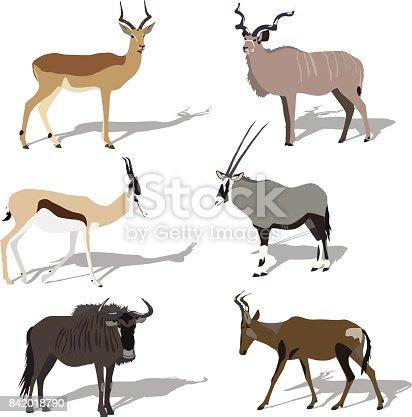 Five african antilope, set, shadows,