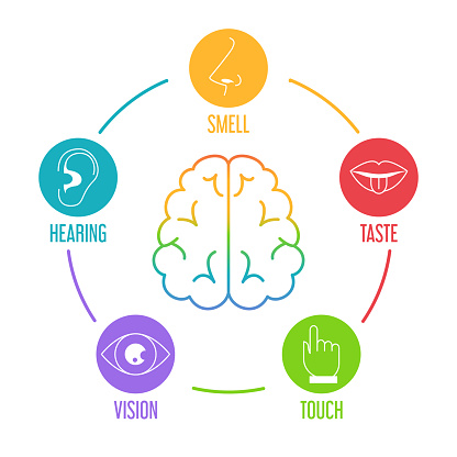 Five human senses icon set. Vector isolated illustration of human perception. Taste, touch, hearing, smell and vision. Sensory organs. Brain icon