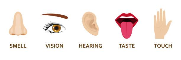fünf menschlichen sinne symbole festgelegt. cartoon-design-nase, auge, hand, ohr und mund. vektor-illustration. - farbwahrnehmung stock-grafiken, -clipart, -cartoons und -symbole