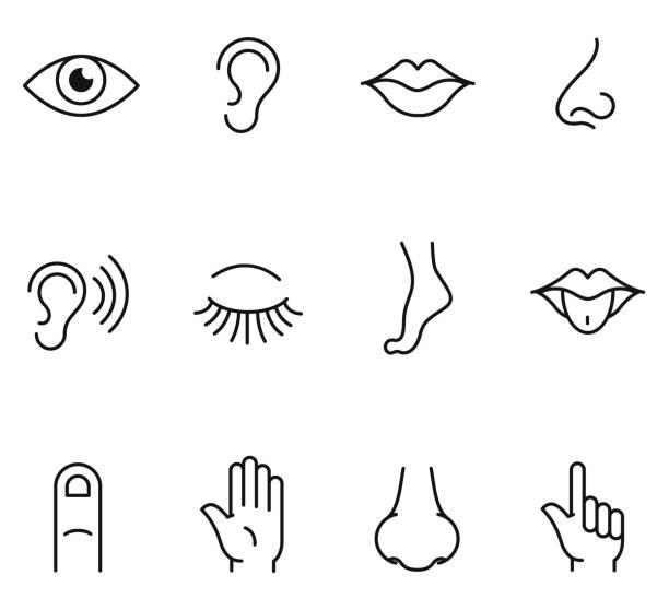 stockillustraties, clipart, cartoons en iconen met vijf pictogrammen van de menselijke zintuigen - tasting