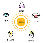 Five human senses vision , hearing, smell, touch and taste vector line icon illustration