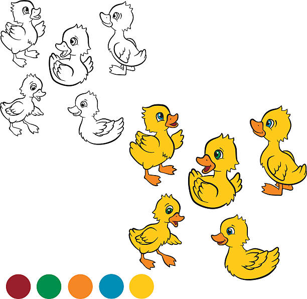 Five little cute ducklings swim and stand. Coloring page. Color me: duck. Five little cute ducklings swim and stand. duckling stock illustrations