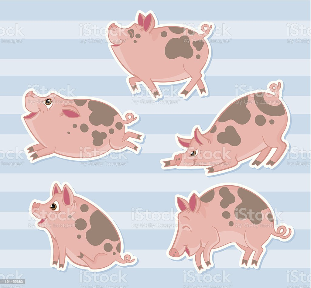 Five positioned cartoon pigs on striped blue background royalty-free stock vector art