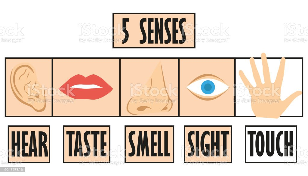 five senses icon, flat design with name, hear, taste, smell, sight, touch