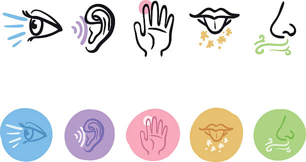 Five senses icon set hand drawn icon set of the five senses sensory perception stock illustrations