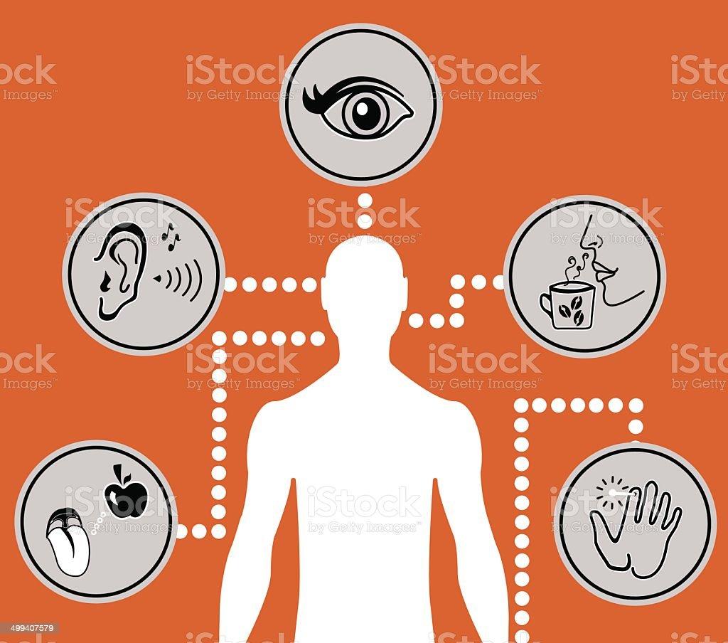 Ilustración de Cinco Sentidos Iconos Diagrama y más banco de ...