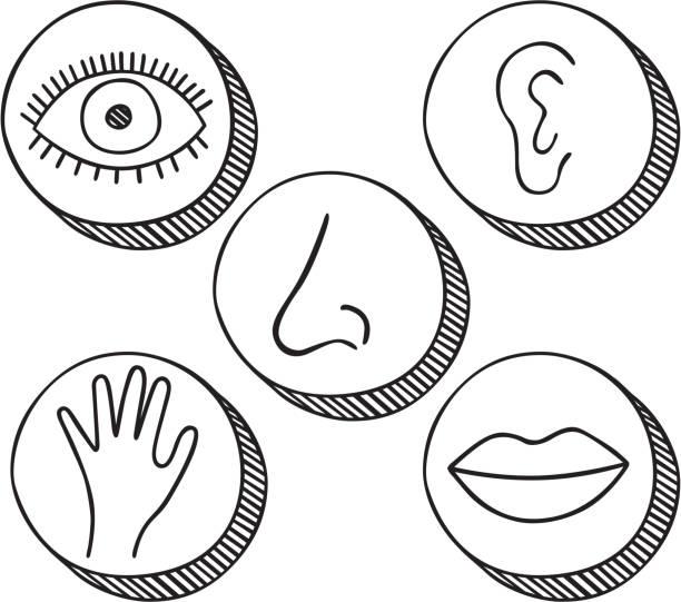 Cinco sentidos ícones - ilustração de arte em vetor
