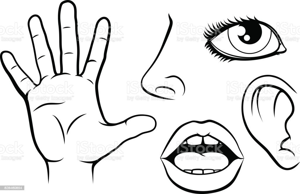 Five Senses Illustration vector art illustration