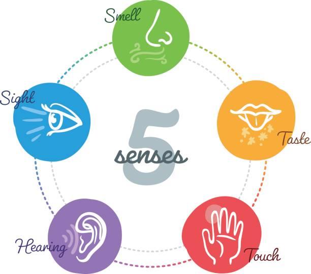 Fünf Sinne in eine Mind-Map-design – Vektorgrafik