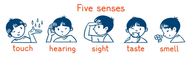 Five senses monochrome icon set. Boys illustration Icons of five senses - touch, taste, hearing, sight, smell. Children vector illustration of boy in t-shirt sensory perception stock illustrations
