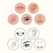 five senses, nose lips eye ear and hand