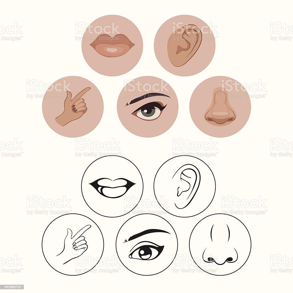 five senses, nose lips eye ear and hand vector art illustration