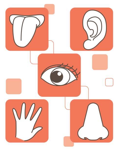 fünf sinne set - sensorischer impuls stock-grafiken, -clipart, -cartoons und -symbole