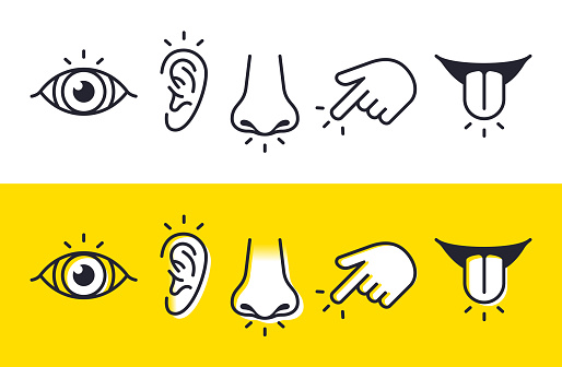 Five senses sight, hearing, smell, touch and taste symbols and icons.