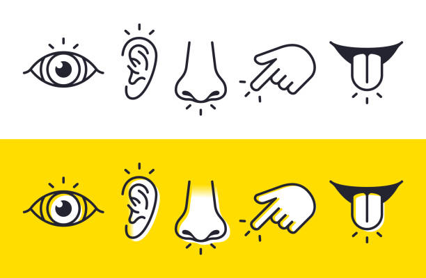 Five Senses Sight Hearing Smell Touch Taste Icons and Symbols Five senses sight, hearing, smell, touch and taste symbols and icons. sensory perception stock illustrations