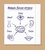 Five senses sketch on notebook page