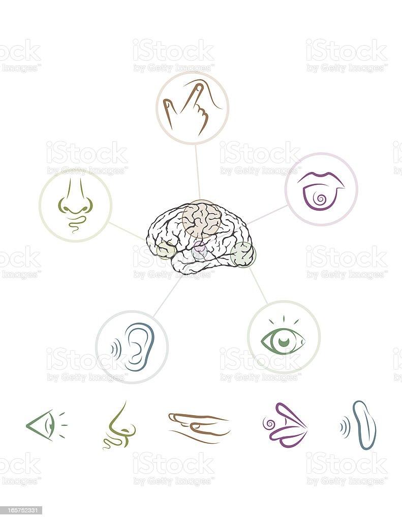 Five Senses vector art illustration