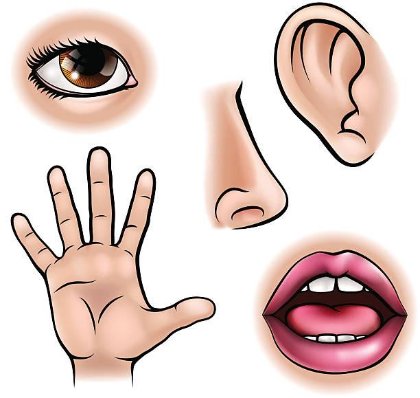 fünf senses - farbwahrnehmung stock-grafiken, -clipart, -cartoons und -symbole