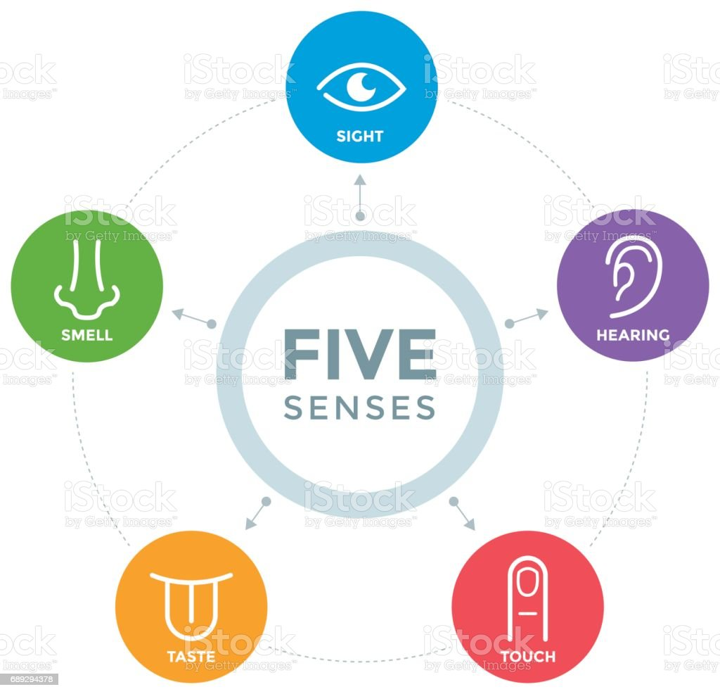 Five senses with icons in a mind map design stock vector for 5 senses in architecture