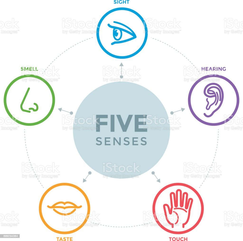 Five senses with icons in a mind map design vector art illustration
