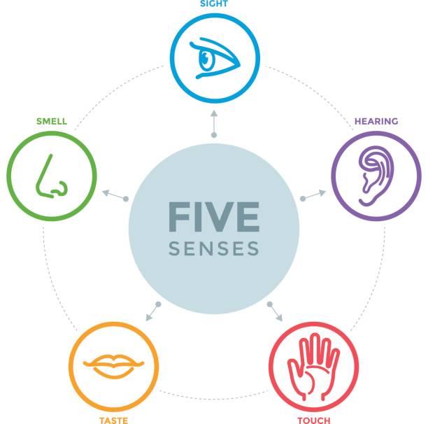 fünf sinne mit symbolen in einer mind map-design - farbwahrnehmung stock-grafiken, -clipart, -cartoons und -symbole