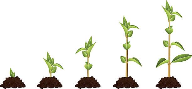 ilustrações de stock, clip art, desenhos animados e ícones de sequência de planta - alter do chão