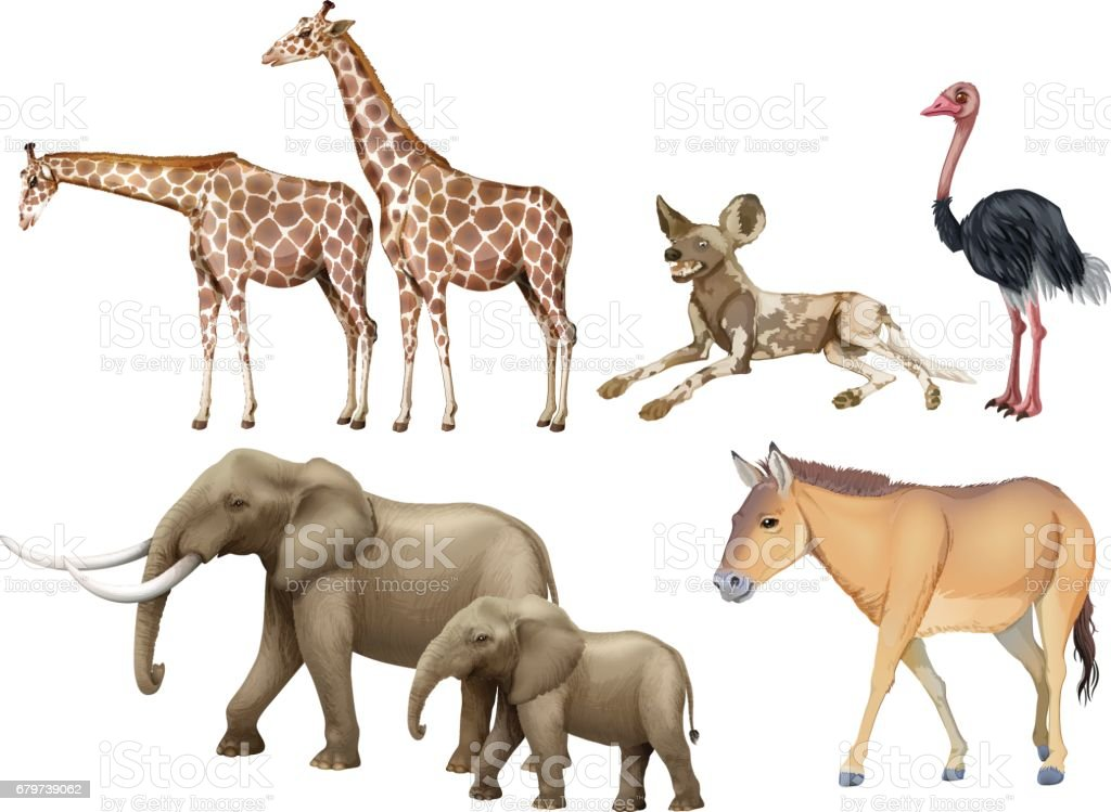 Five Types Of Wild Animals Stock Illustration - Download Image Now ...