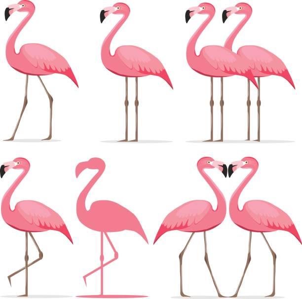 flamingo, a set of pink flamingos - flamingo stock illustrations