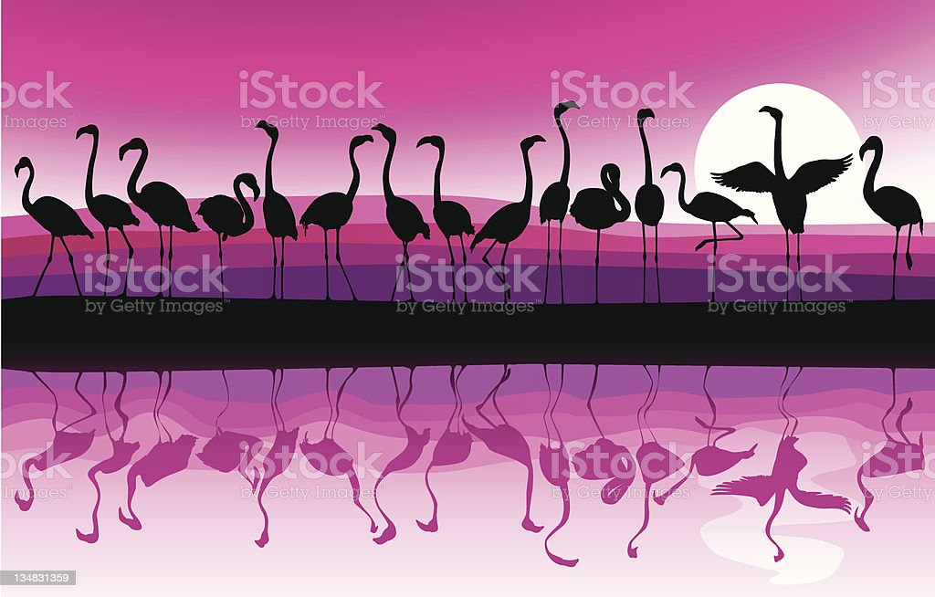 Flamingo Background vector art illustration