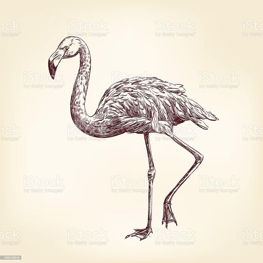 flamingo hand drawn royalty-free stock vector art