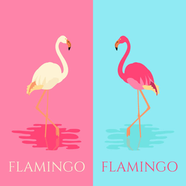 Flamingo in two colors Vector illustration of a flamingo standing in water on one leg in two colors. Exotic bird made in flat style. Flat flamingo bird symbol. Flamingo icon. Flamingo vector silhouette. Wildlife concept. lakeshore stock illustrations