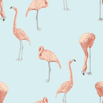 Flamingo Seamless Repeat Pattern