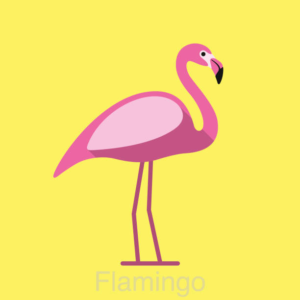 flamingo standing, bird series - flamingo stock illustrations