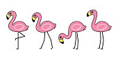 flamingo vector icon pink flamingos collection cartoon character animal exotic nature wild fauna illustration doodle