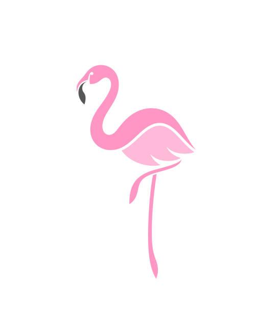 flamingo - flamingo stock illustrations