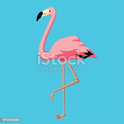 Vector illustration of flamingo.