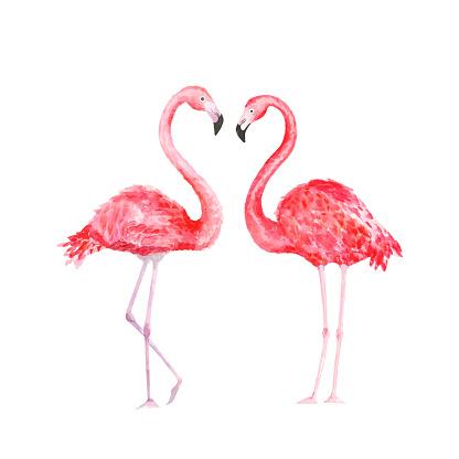 Flamingo. Watercolor tropical bird. Vector illustration